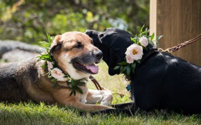 Should we include our dog in the wedding activities?